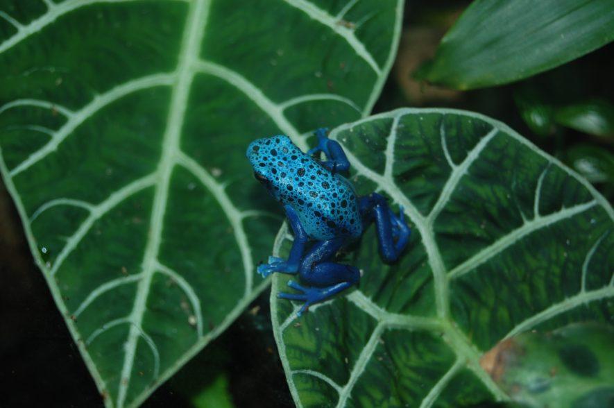 rainforest vivarium plants
