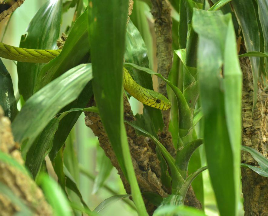 Tropical Vivarium Plants 19 Wonderful Plants For Your Habitat