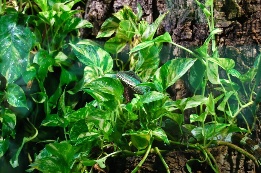 Tropical Vivarium Plants 19 Wonderful Plants For Your Habitat