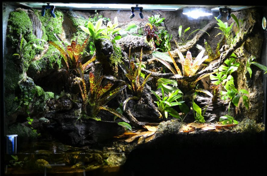 Vivarium Setup How To Build A Rainforest Terrarium Step By Step
