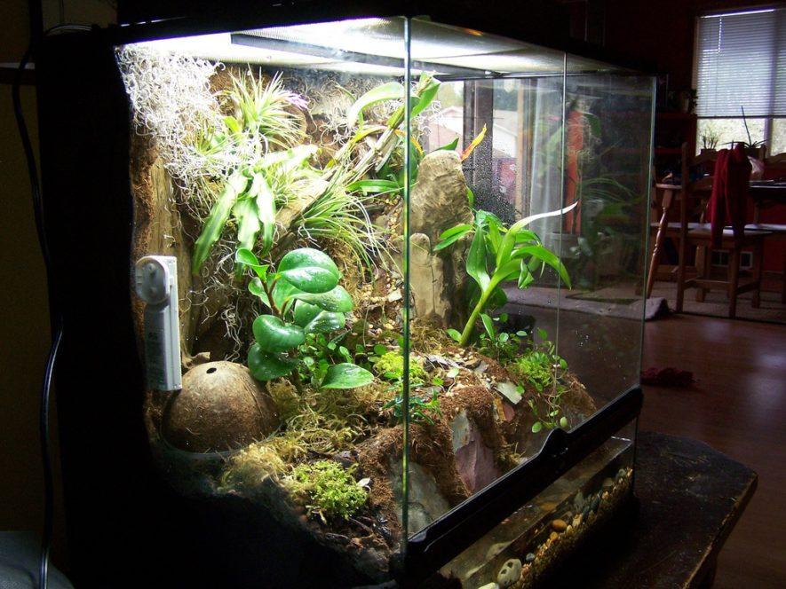 vivarium tank