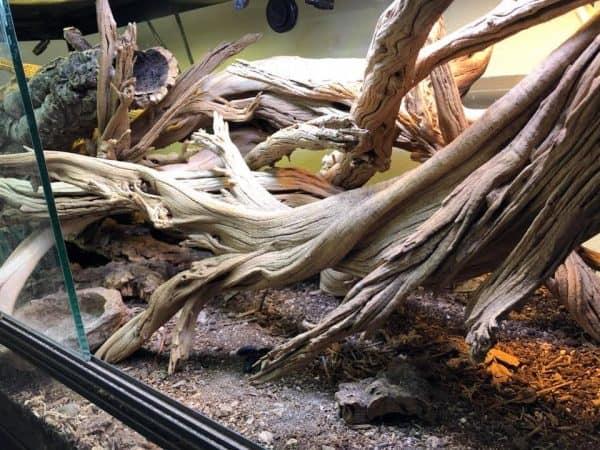 desert bioactive terrarium