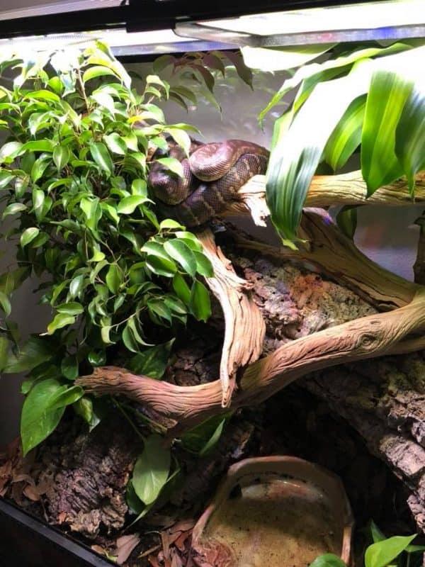python bioactive vivarium