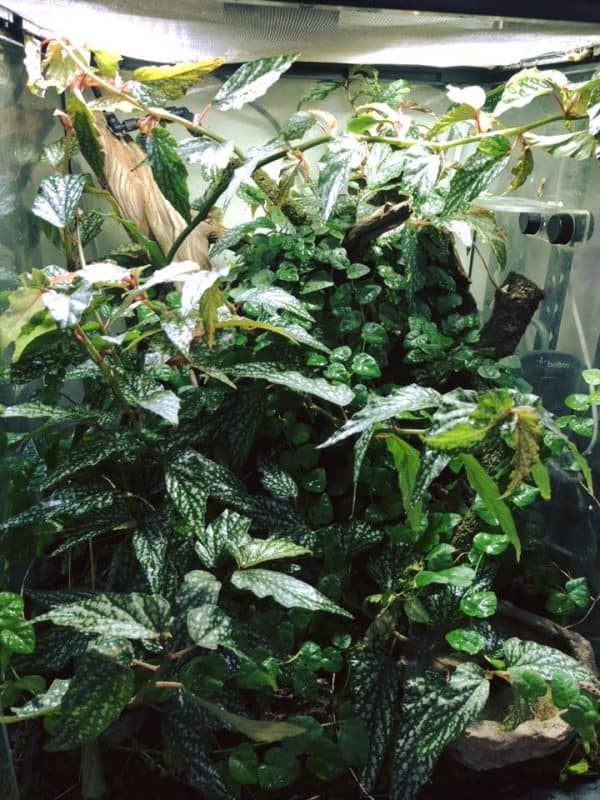 rainforest bioactive vivarium